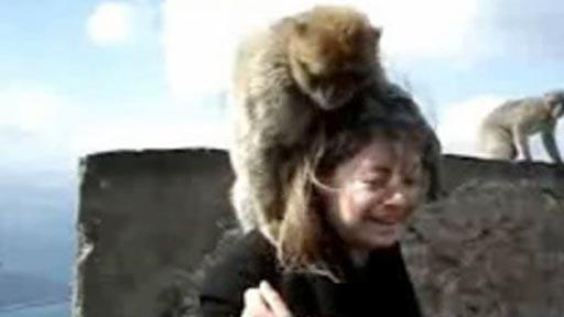 Monos en la cara