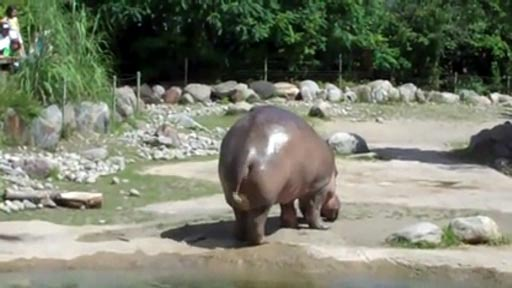 El hipopótamo
