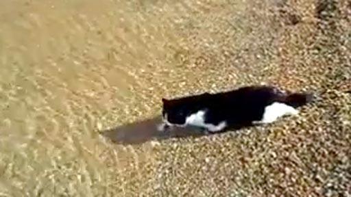Un gato nadando
