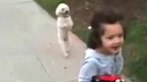 Paseando al perrito
