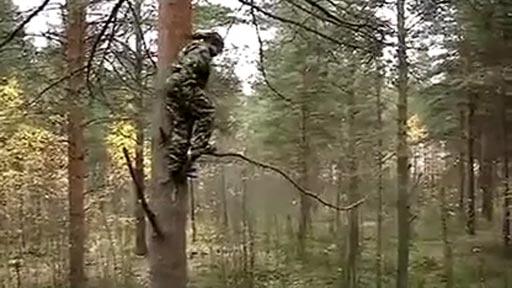 Saltando del árbol