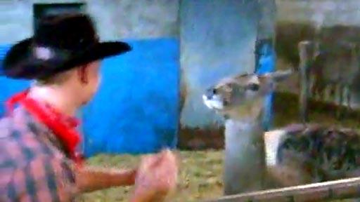 Cowboy Vs ciervo