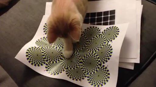Gato Vs Ilusión Óptica