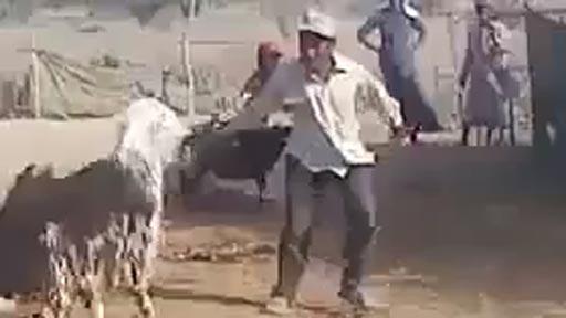 Cabra vengativa