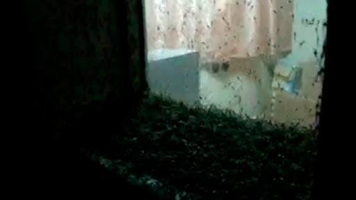 Plaga de mosquitos