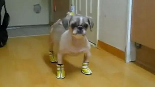 Perros con botas