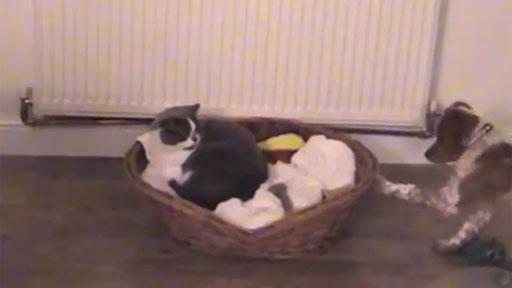 Gatos robando camas