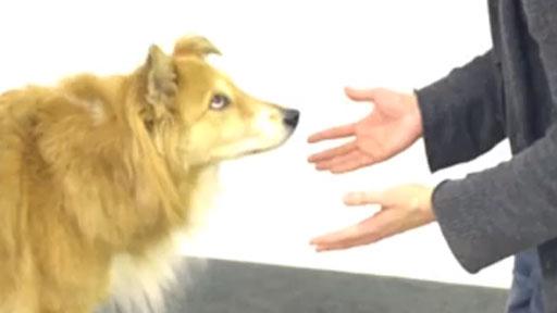 Magia para perros (2)