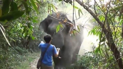 Turista vs Elefante