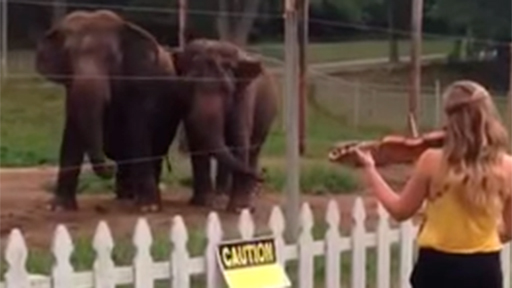 Elefantes bailando