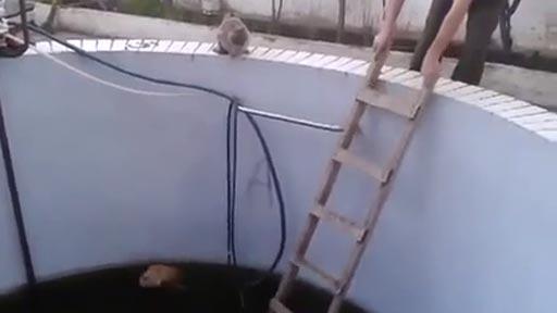 Rescate con sorpresa