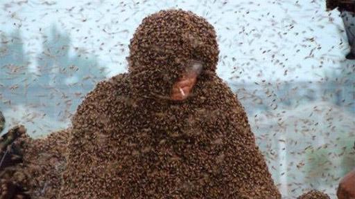 Un millón de abejas