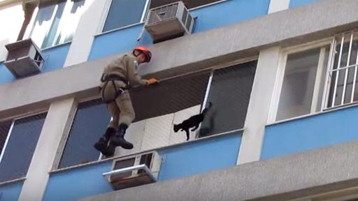 Rescatar al gato