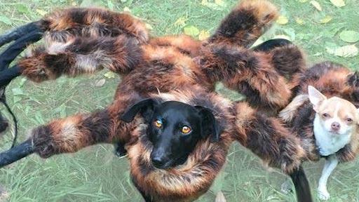 Vuelve el perro-araña