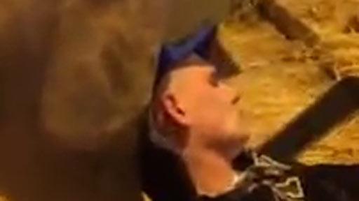 Dormido en el establo