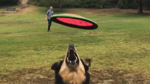 Lanzamiento de frisbee