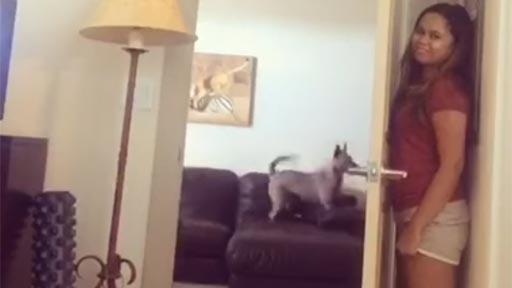Jugando al escondite con mi perro