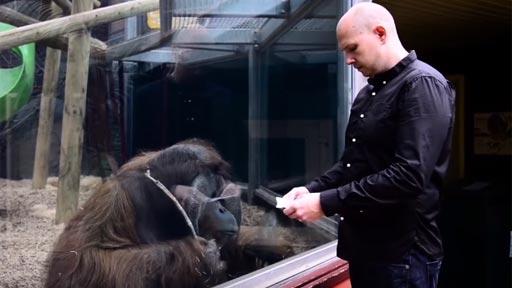Haciéndole magia a un orangután