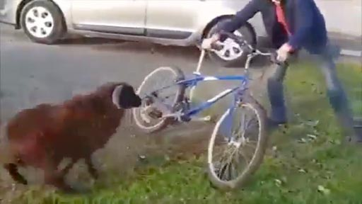 El ataque del carnero