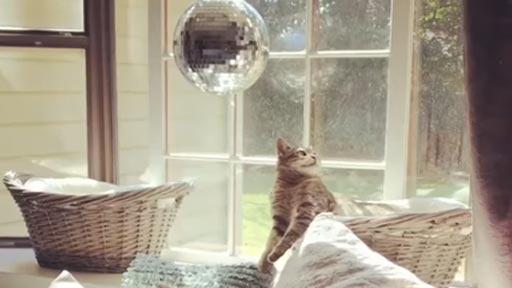 Gato fascinado con la bola disco