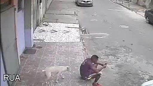 Un perro haciendo nuevos amigos