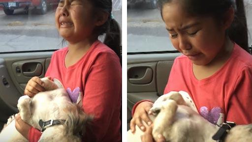 El nuevo corte de pelo de su perro